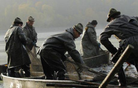 Rybáři vytahující sítě z vody